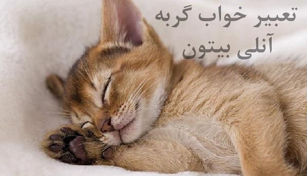 تعبیر خواب گربه آنلی بیتون