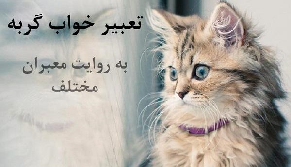 تعبیر خواب گربه به روایت معبران مختلف