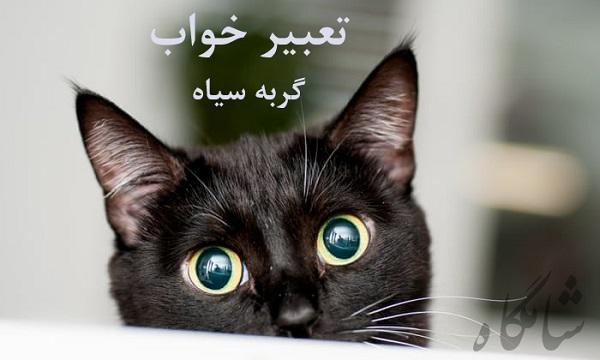 تعبیر خواب گربه سیاه