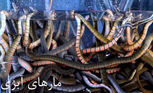 مارهای آبزی دریایی