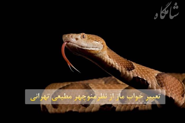 تعبیر خواب مار منوچهر مطیعی تهرانی